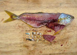 マイクロプラスチックの魚